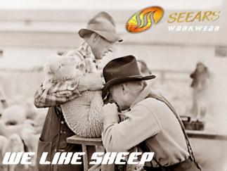 Seears sheep